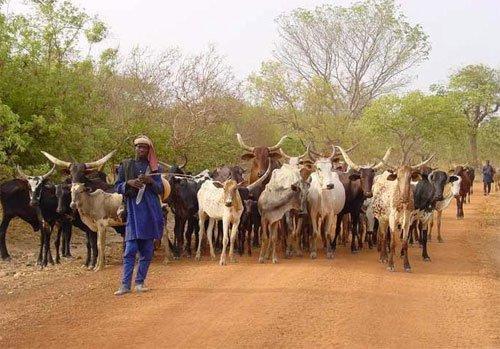 Une « Tribune pastorale » pour défendre les intérêts des éleveurs