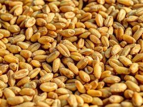 legere-hausse-des-produits-cerealiers-au-niger