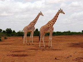 le-niger-33eme-pays-le-plus-attractif-pour-les-investisseurs