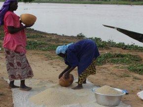 les-producteurs-de-riz-appellent-l-etat-a-promouvoir-le-riz-local
