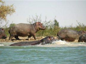 bientot-le-sanctuaire-des-hippopotames-pour-mettre-fin-au-conflit-homme-faune